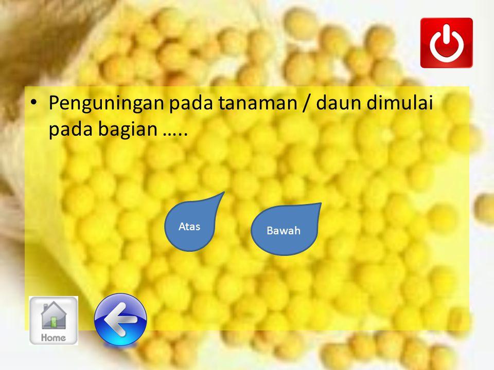 Apakah kelayuan disertai dengan perubahan warna perlahan menjadi berwarna kuning ?