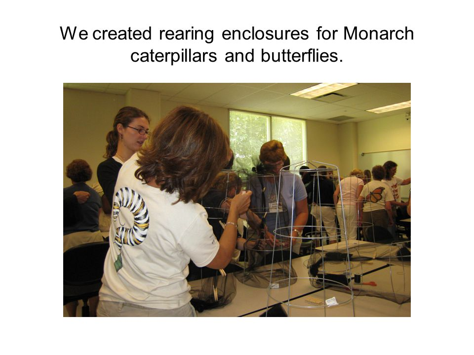 We created rearing enclosures for Monarch caterpillars and butterflies.