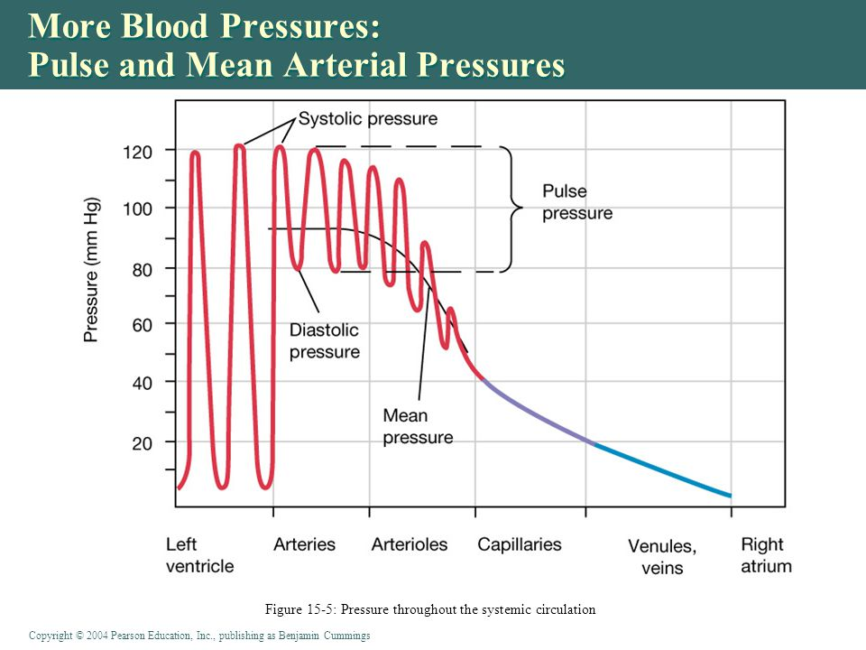 Copyright © 2004 Pearson Education, Inc., publishing as Benjamin Cummings More Blood Pressures: Pulse and Mean Arterial Pressures Figure 15-5: Pressure throughout the systemic circulation