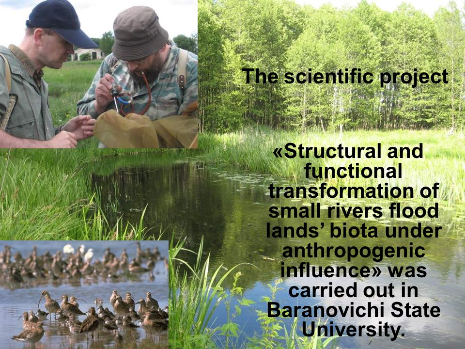 The scientific project «Structural and functional transformation of small rivers flood lands' biota under anthropogenic influence» was carried out in Baranovichi State University.
