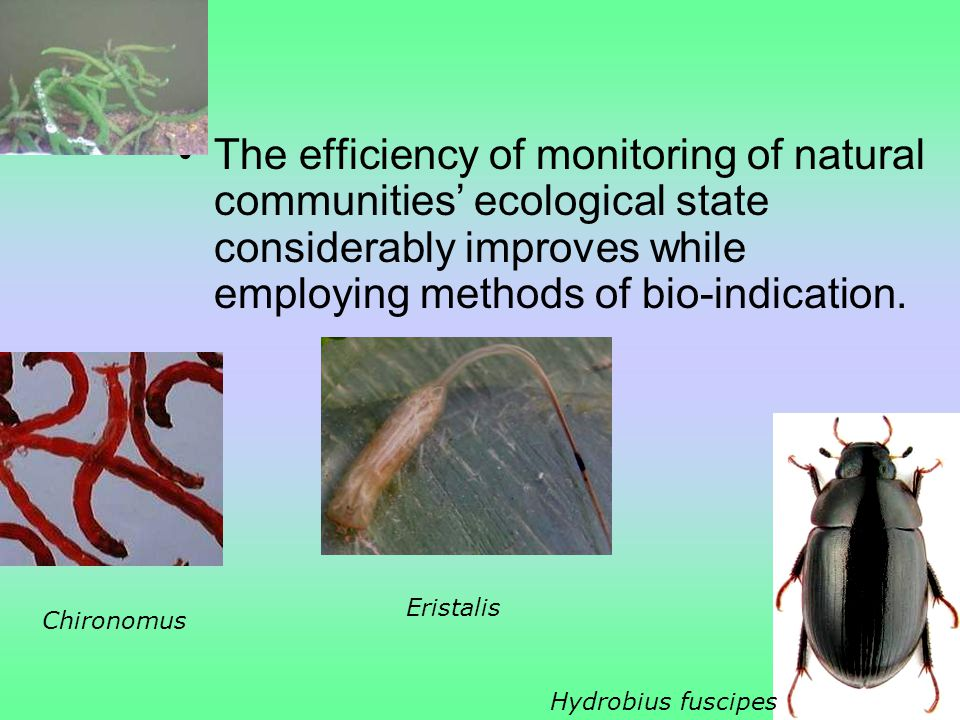 The efficiency of monitoring of natural communities' ecological state considerably improves while employing methods of bio-indication.