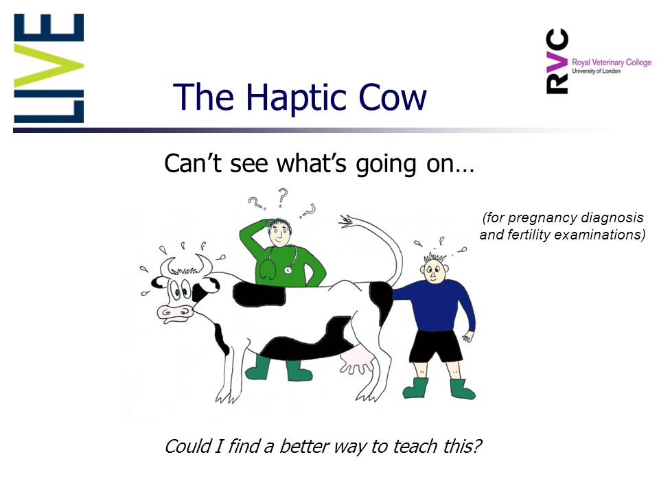 The Haptic Cow Can't see what's going on… Could I find a better way to teach this.