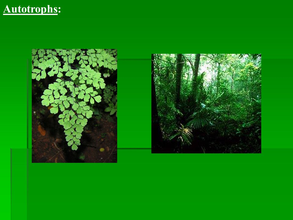 """a. Photosynthesis Photo (light) synthesis (creating, making) -Light is the source of energy for the production of food. -""""Who?"""" ex. Plants"""
