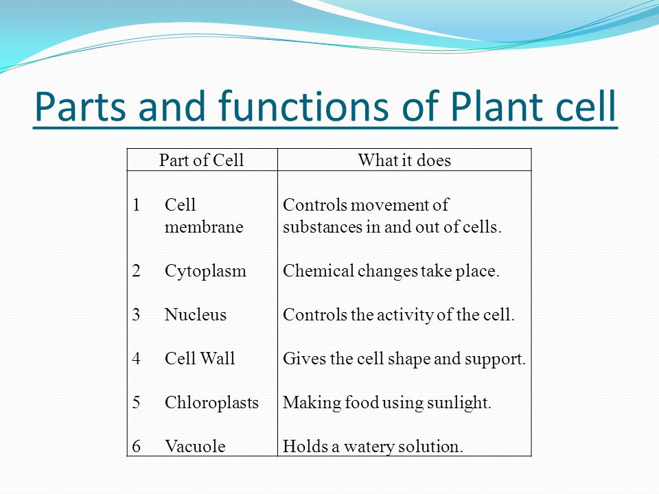Parts and functions of Plant cell Part of CellWhat it does 1Cell membrane 2Cytoplasm 3Nucleus 4Cell Wall 5Chloroplasts 6Vacuole Controls movement of substances in and out of cells.
