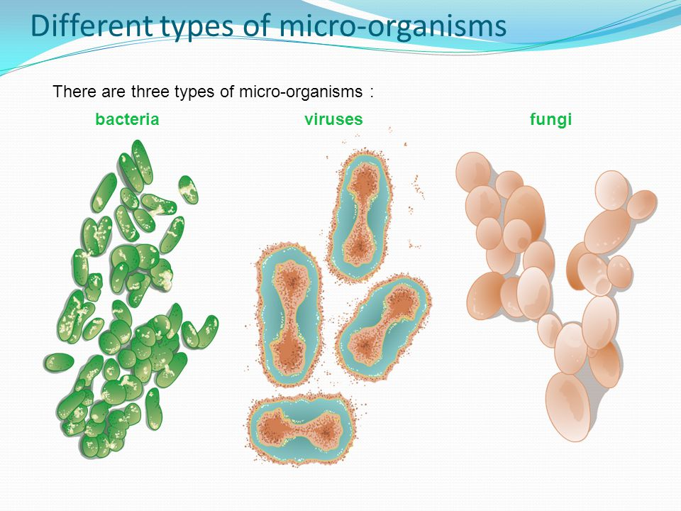 Different types of micro-organisms There are three types of micro-organisms : bacteriavirusesfungi