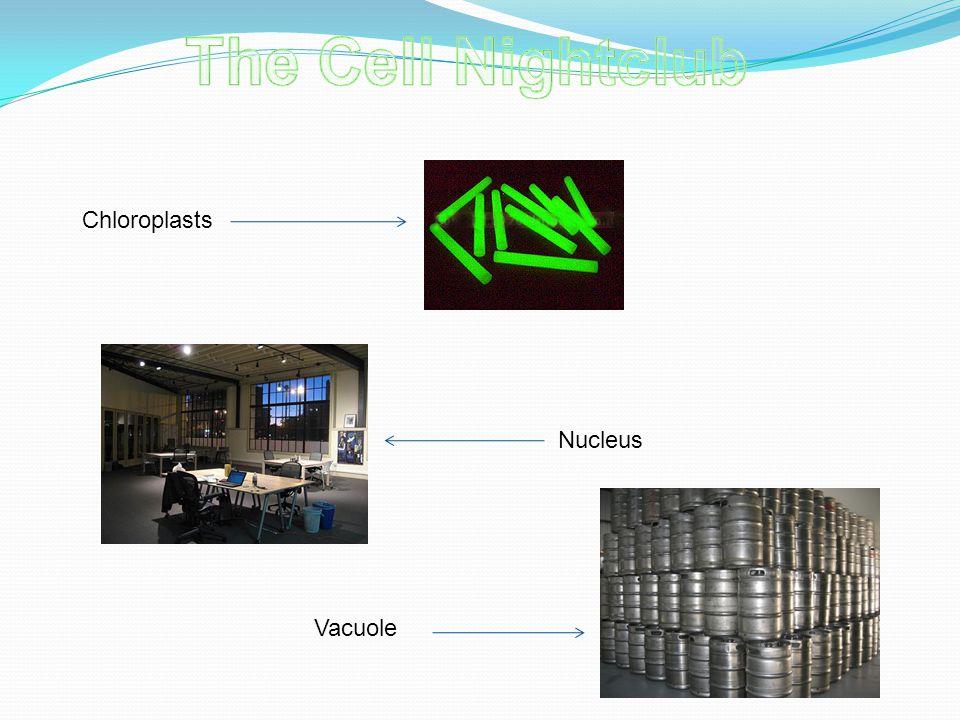 Chloroplasts Nucleus Vacuole