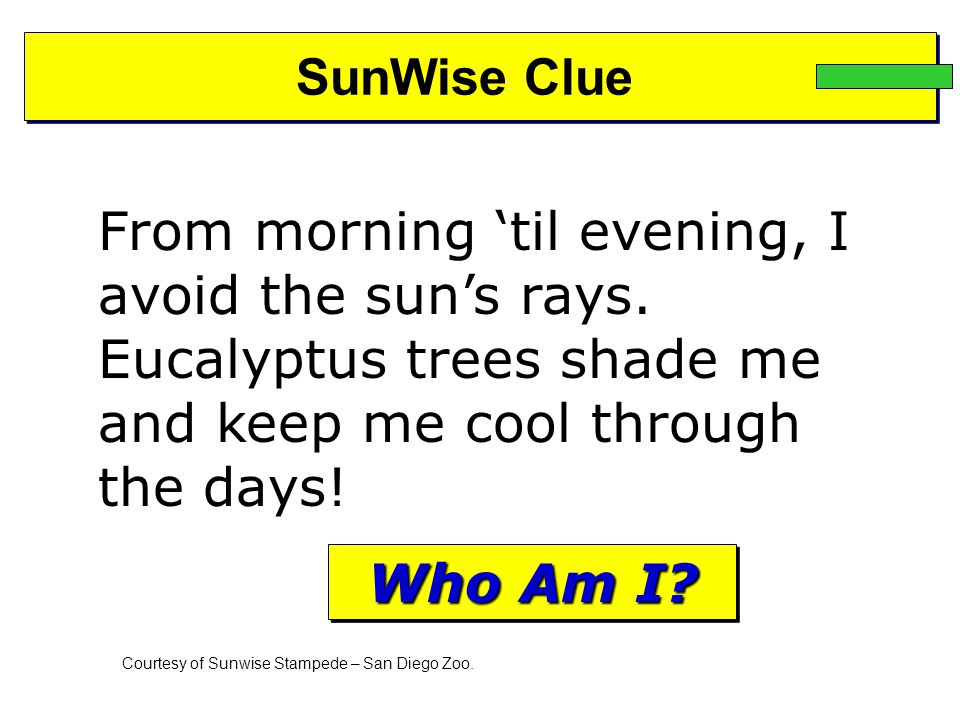 SunWise Clue From morning 'til evening, I avoid the sun's rays. Eucalyptus trees shade me and keep me cool through the days! Courtesy of Sunwise Stamp