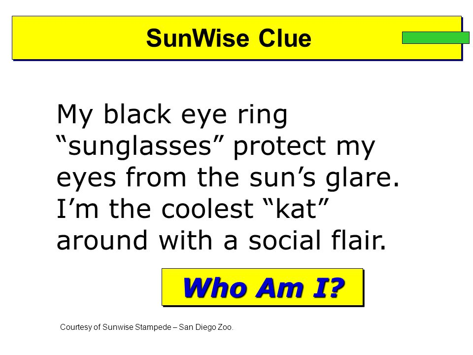 SunWise Clue My black eye ring sunglasses protect my eyes from the sun's glare.