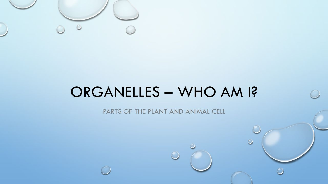 ORGANELLES – WHO AM I? PARTS OF THE PLANT AND ANIMAL CELL