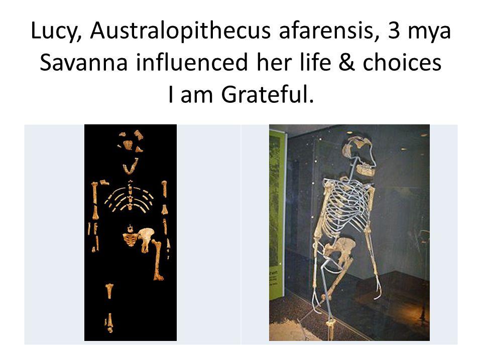 Lucy, Australopithecus afarensis, 3 mya Savanna influenced her life & choices I am Grateful.