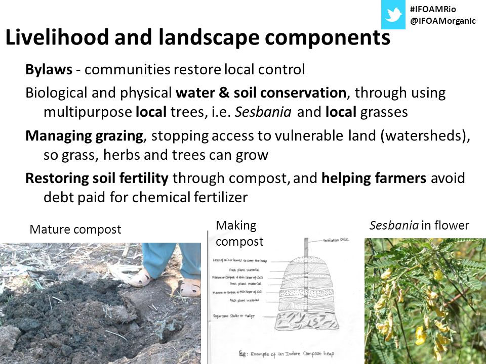 Landscape rehabilitation started in 1996, pictured in 2003 (similar examples now seen in many place) throughout Pond Rehabilitated gullies Sesbania trees and long grasses Composted fields growing tef, wheat and barley Faba bean Rehabilitated biodiverse hillside for bee keeping #IFOAMRio @IFOAMorganic
