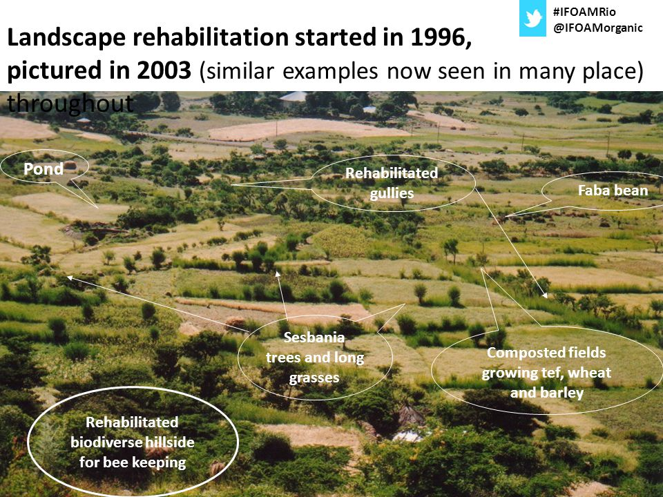 Landscape rehabilitation started in 1996, pictured in 2003 (similar examples now seen in many place) throughout Pond Rehabilitated gullies Sesbania tr