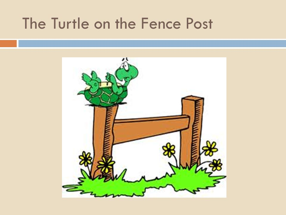 The Turtle on the Fence Post