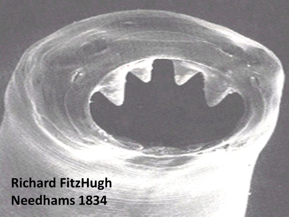 Richard FitzHugh Needhams 1834