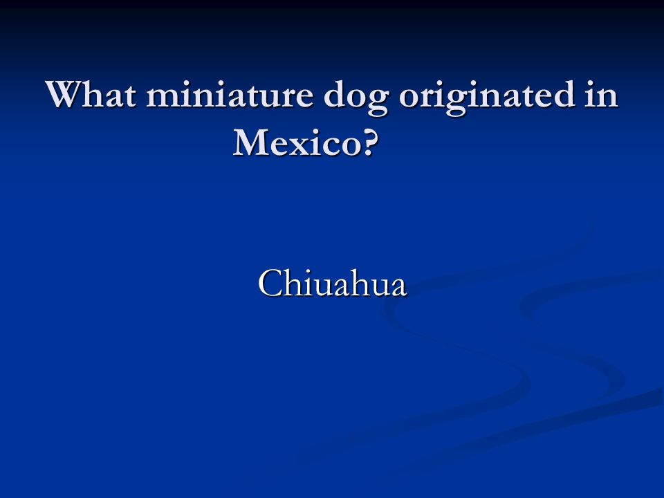 What miniature dog originated in Mexico Chiuahua