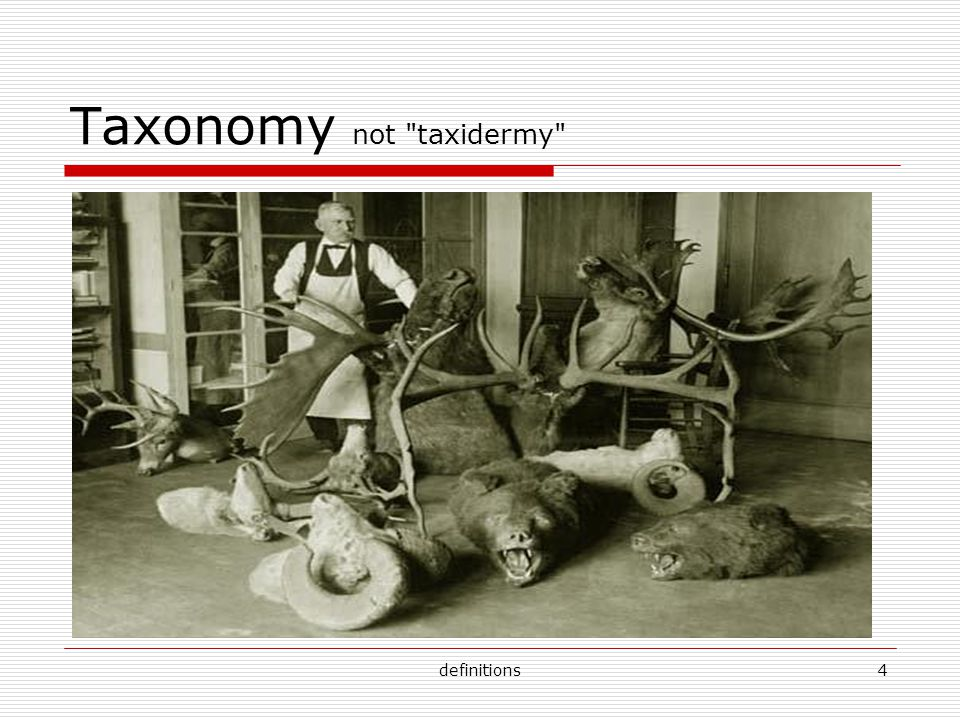 definitions4 Taxonomy not taxidermy
