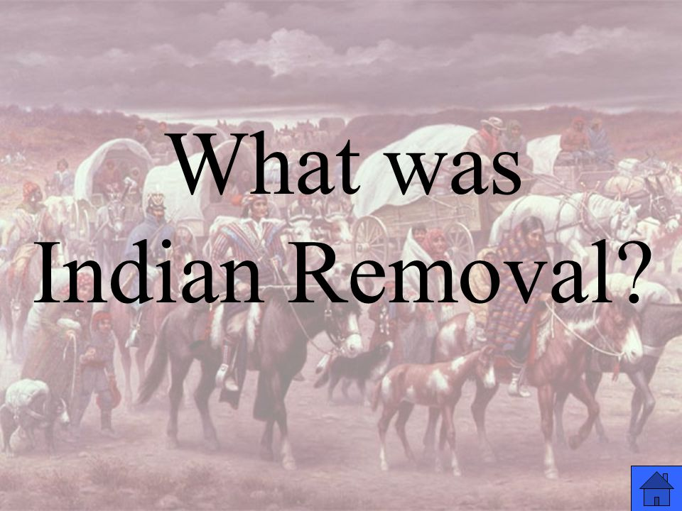 What was Indian Removal
