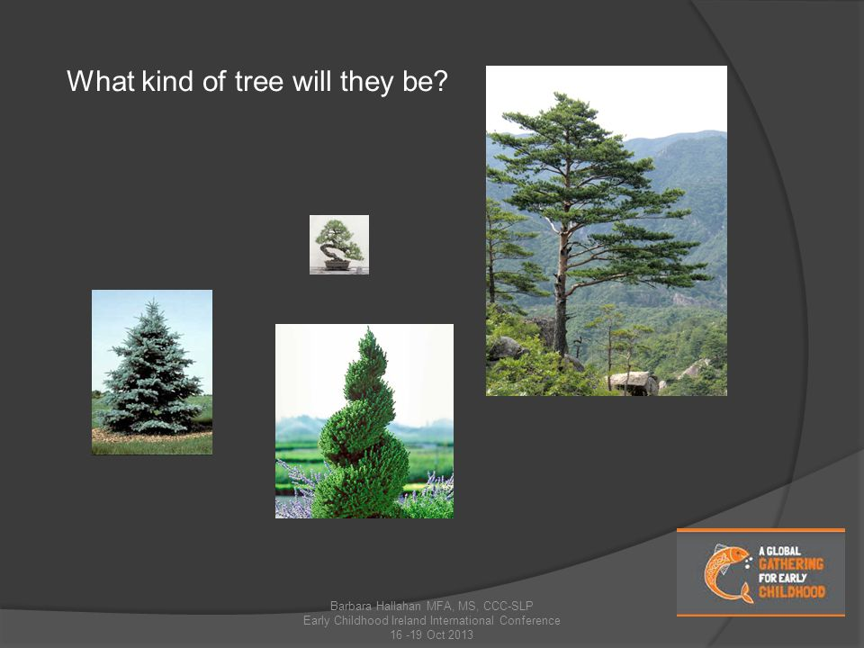 What kind of tree will they be.