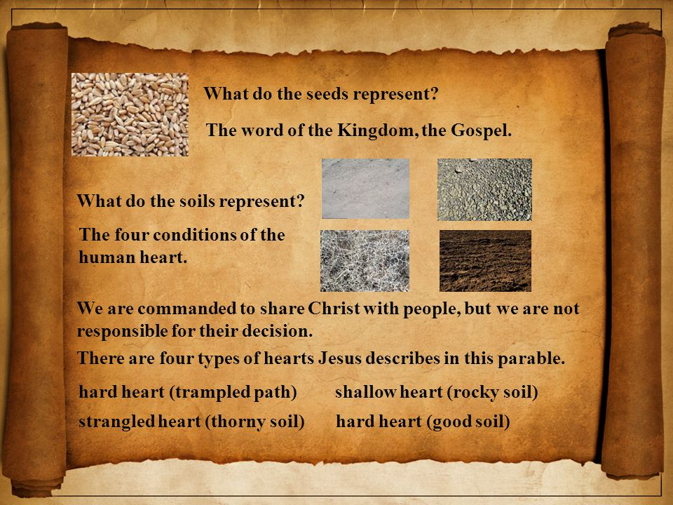 What do the seeds represent.The word of the Kingdom, the Gospel.