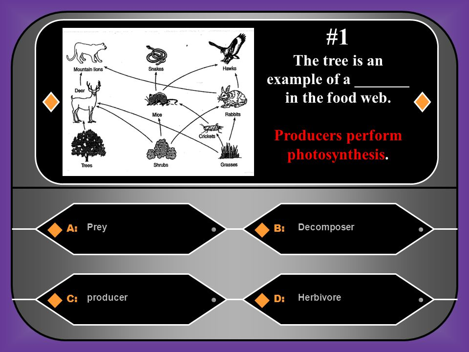 A:B: The energy flow from provider to user.They animal which the organism consumes.