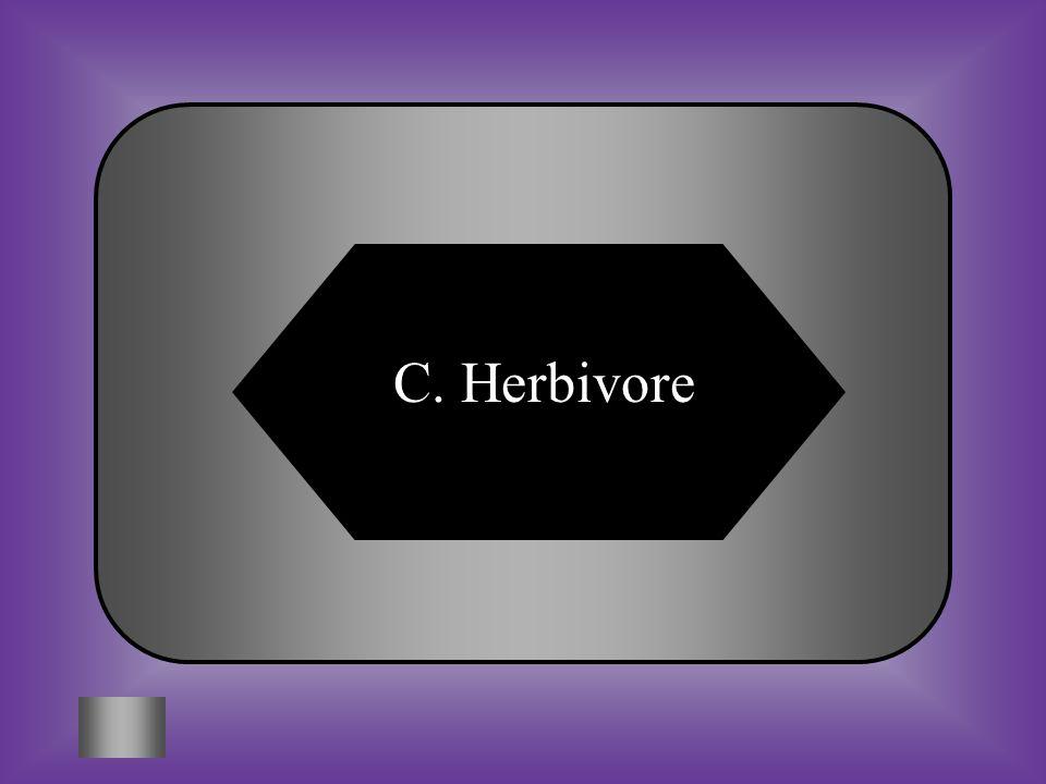 A:B: ecoviorecarnivore C:D: herbivoreomnivore #11 Consumers that eat only plants. Examples: Grasshopper, Rabbit