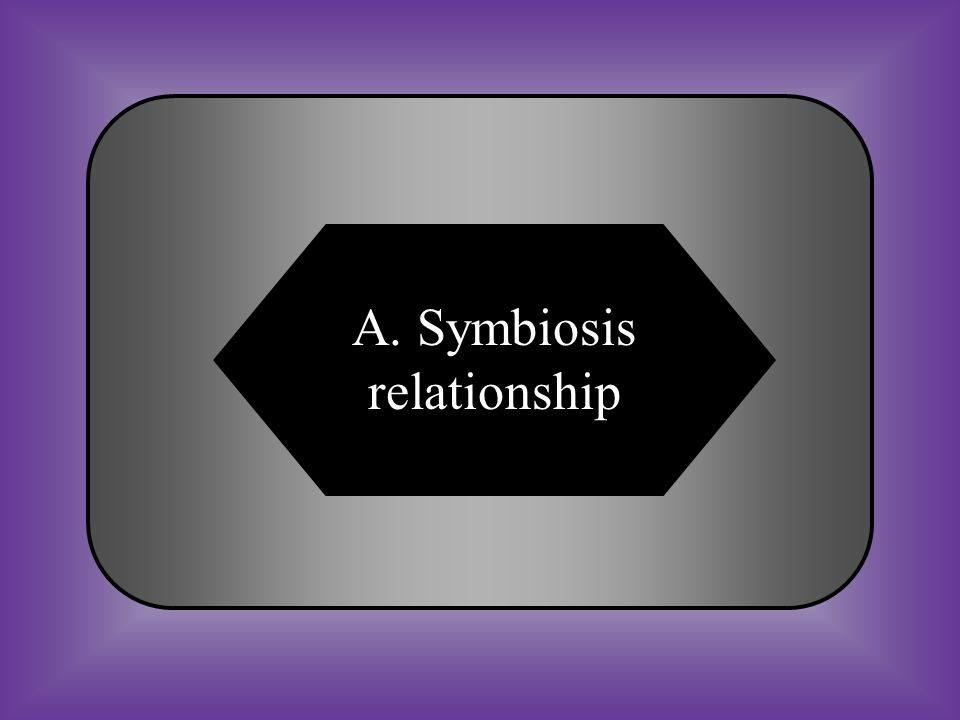 A:B: Symbiotic relationshipStimulus relationship C:D: HomeostasisUnitarianism #13 A close, long-term relationship between two or more species.