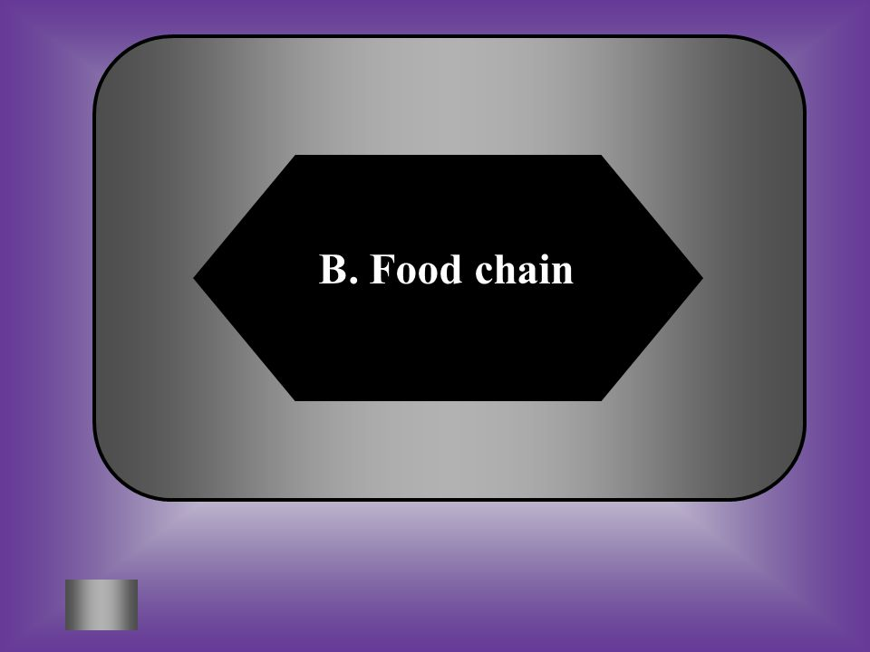 A:B: Web chain Food chain C:D: Both of theseNeither of these A diagram that shows the energy flow from one organism to the next. #15