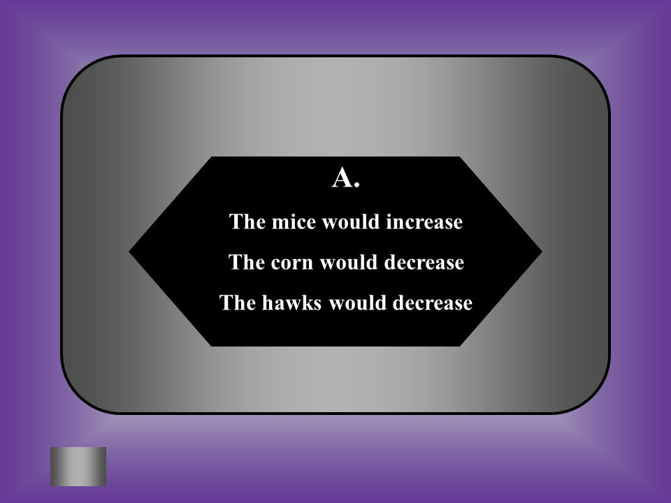 A:B: The mice would increase The corn would decrease The hawks would decrease The mice would decrease The corn would increase The hawks would decrease C:D: BothNeither What would happen if the snakes are killed in this ecosystem.