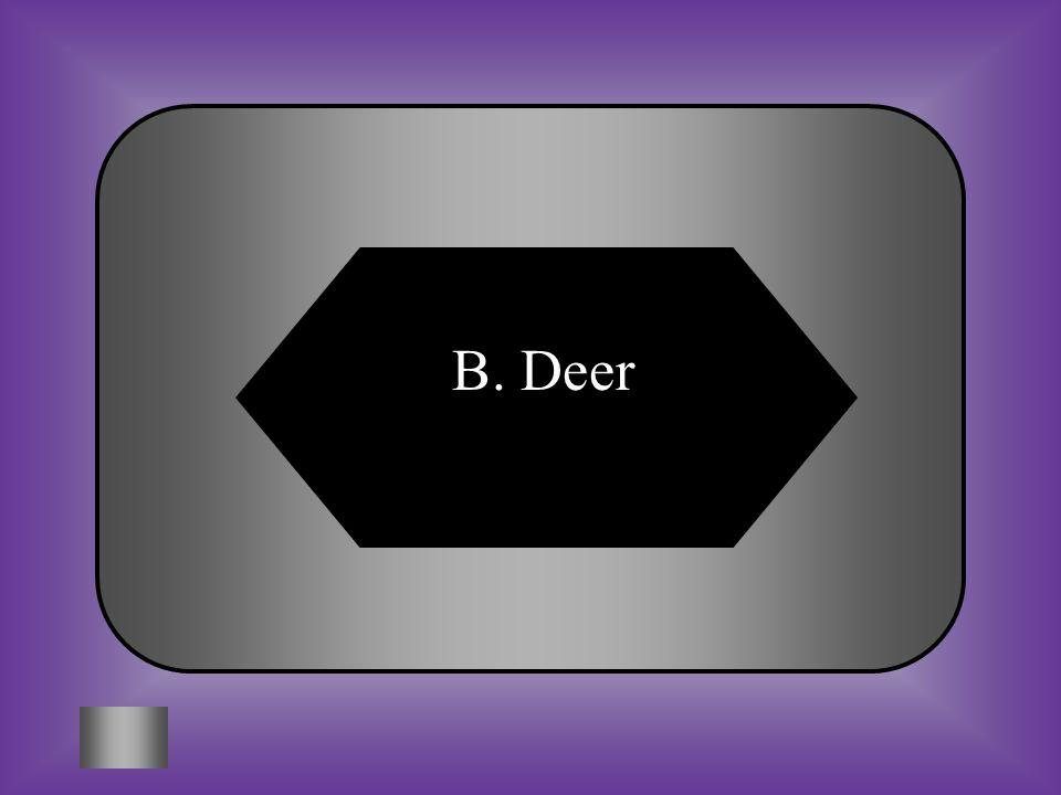 B. Deer