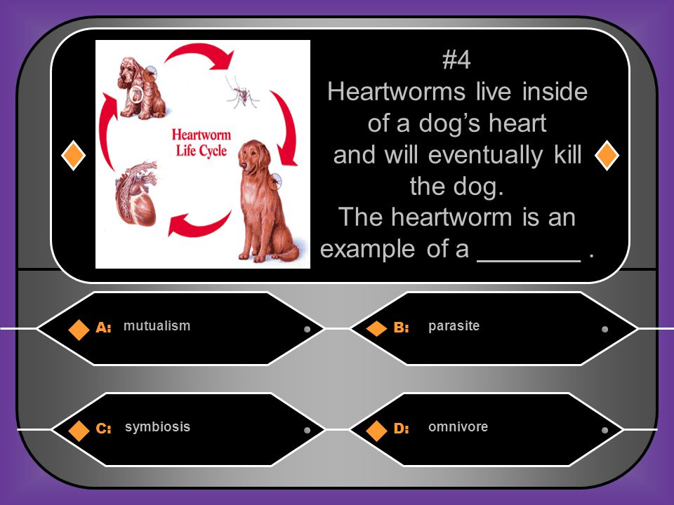 A:B: preysymbiosis # 14 An organism that cannot make its own food. C:D: consumerproducer