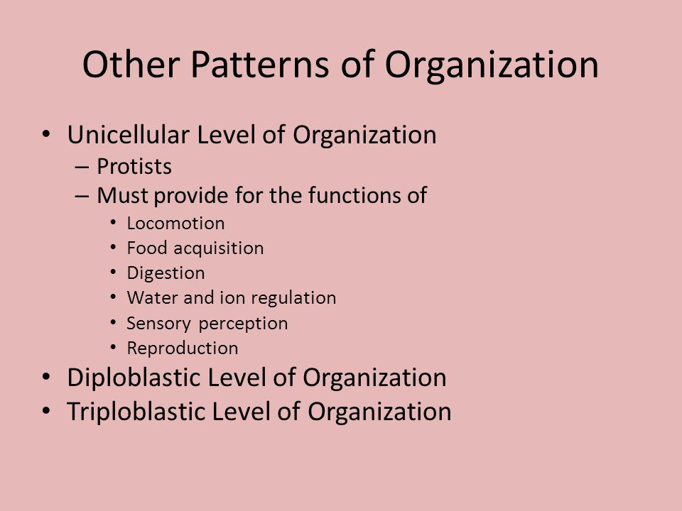 Other Patterns of Organization Unicellular Level of Organization – Protists – Must provide for the functions of Locomotion Food acquisition Digestion