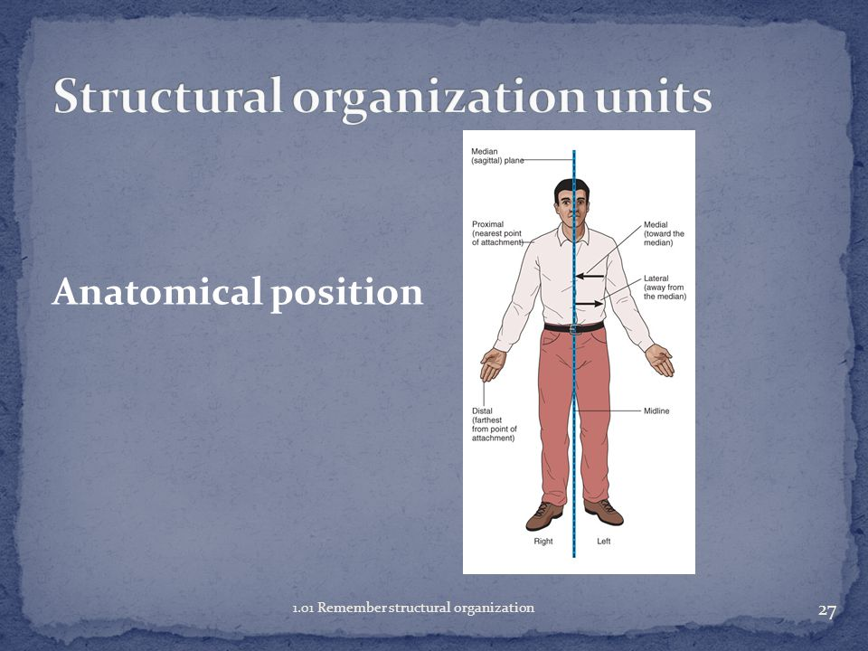 26 1.01 Remember structural organization