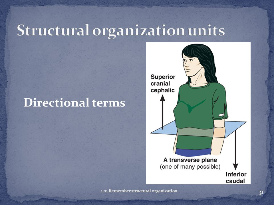 30 1.01 Remember structural organization Directional terms