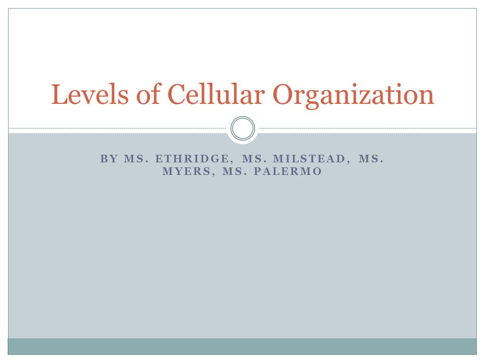 BY MS. ETHRIDGE, MS. MILSTEAD, MS. MYERS, MS. PALERMO Levels of Cellular Organization