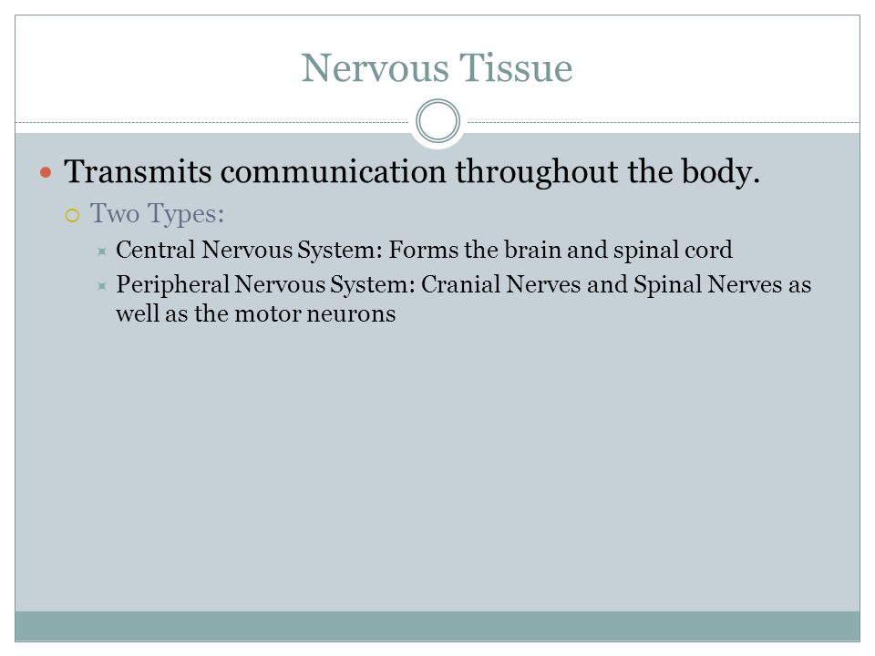 Nervous Tissue Transmits communication throughout the body.