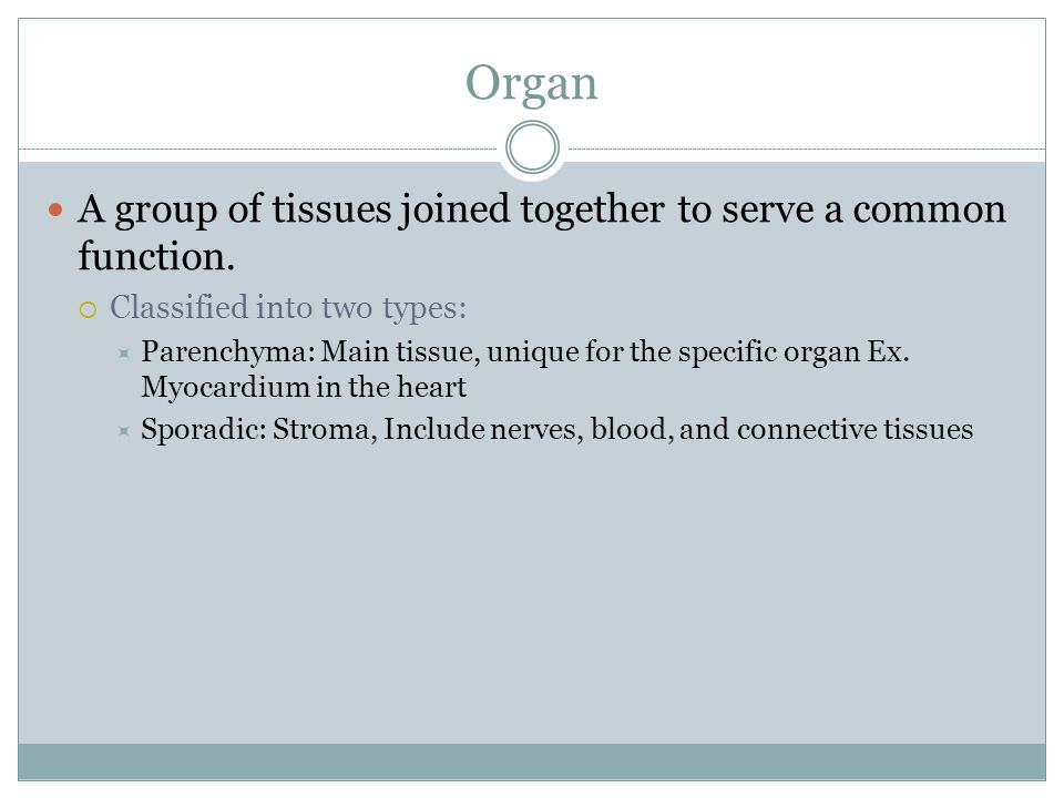 Organ A group of tissues joined together to serve a common function.