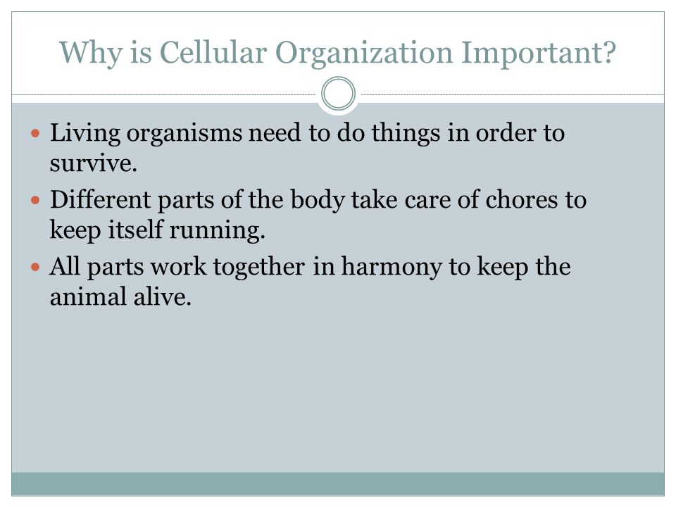 Why is Cellular Organization Important. Living organisms need to do things in order to survive.