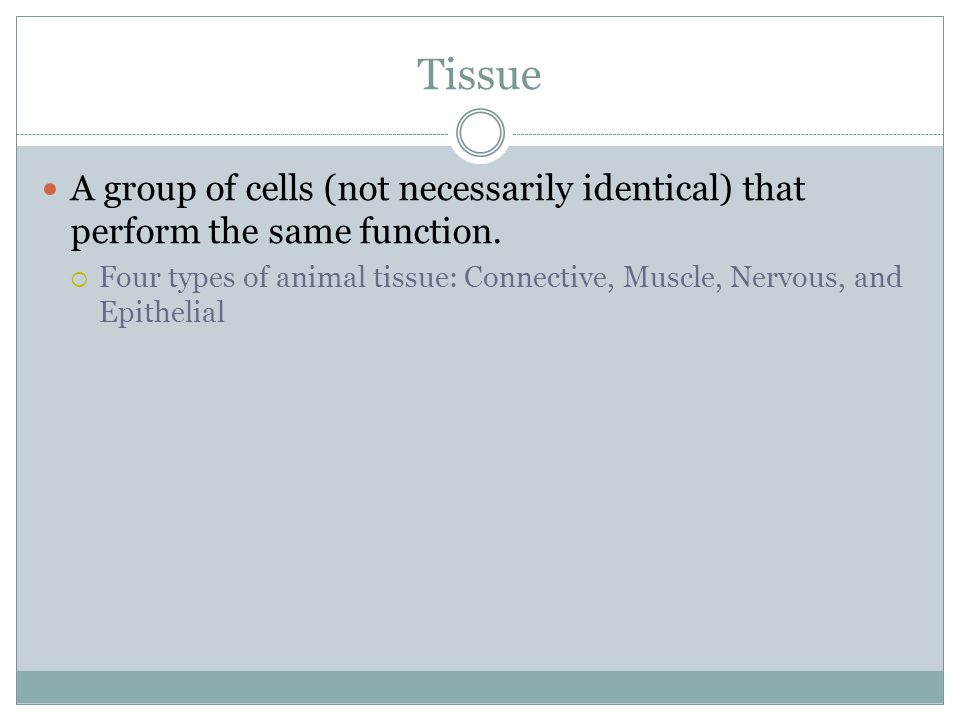 Tissue A group of cells (not necessarily identical) that perform the same function.