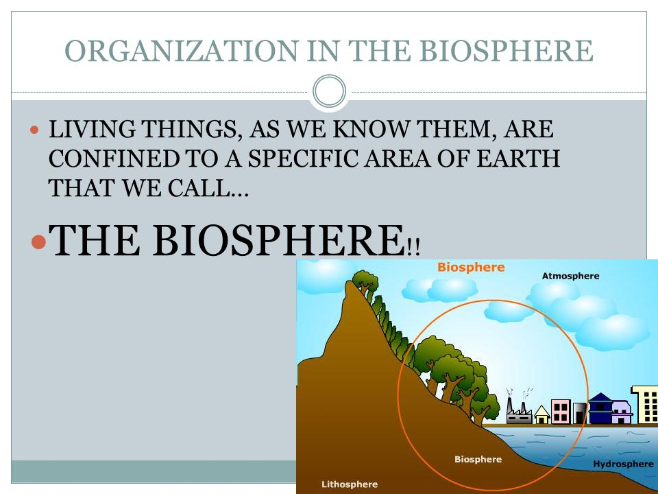 ORGANIZATION IN THE BIOSPHERE LIVING THINGS, AS WE KNOW THEM, ARE CONFINED TO A SPECIFIC AREA OF EARTH THAT WE CALL… THE BIOSPHERE !!