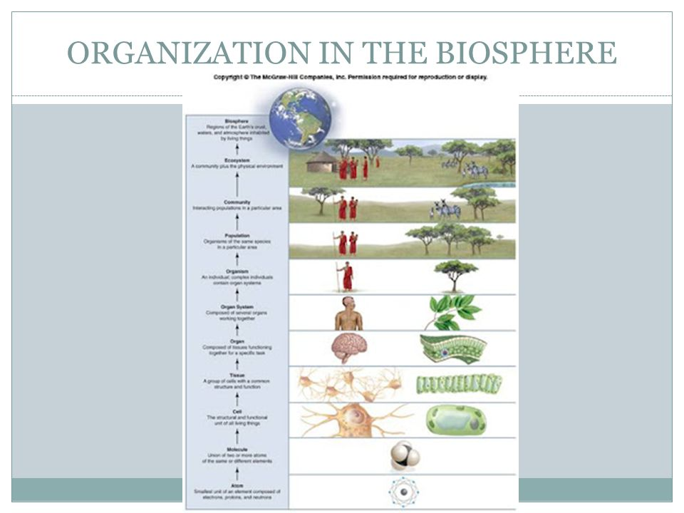 ORGANIZATION IN THE BIOSPHERE DO ALL ECOSYSTEMS LOOK THE SAME.
