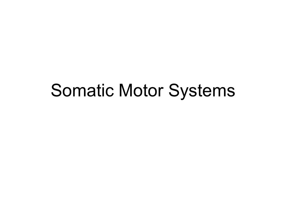 Motor Units are the basic element of motor control in the somatic division A motor unit consists of a single spinal or cranial motor neuron plus the skeletal muscle fibers that it innervates.