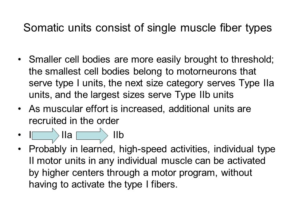 What kinds of synaptic inputs does a spinal motor neuron receive.