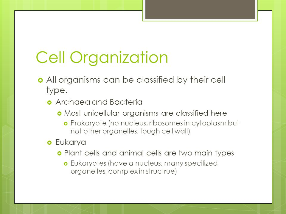 Cell Organization  All organisms can be classified by their cell type.  Archaea and Bacteria  Most unicellular organisms are classified here  Prok