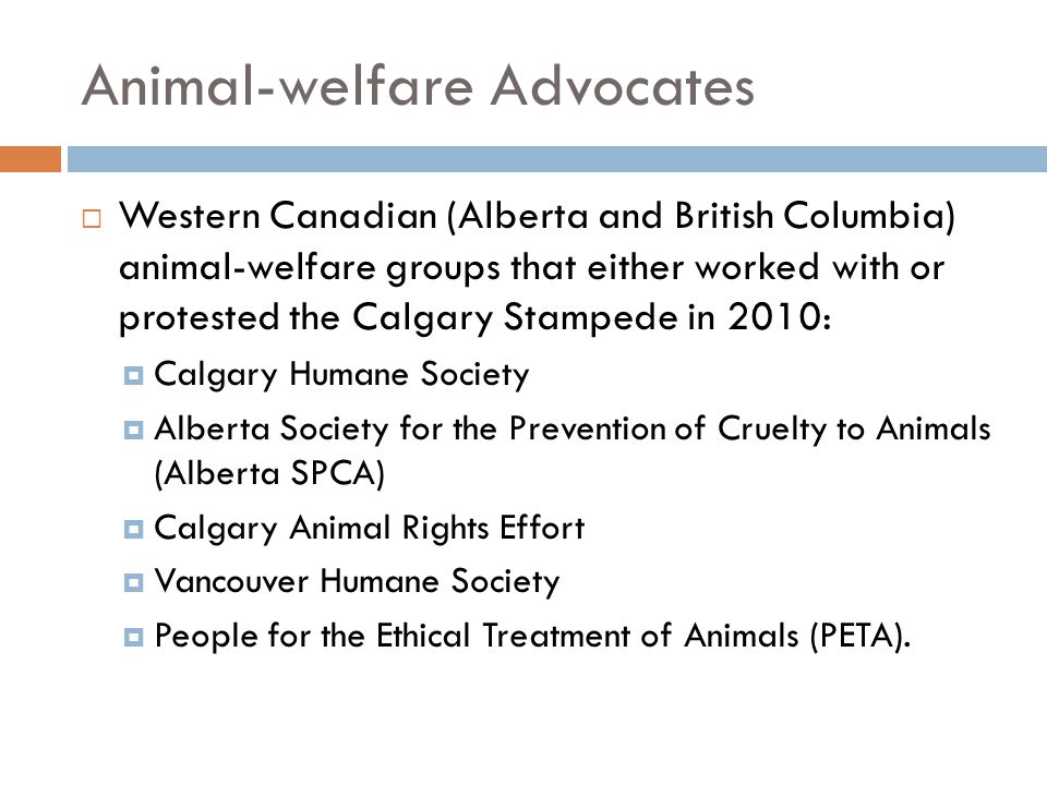 Animal-welfare Advocates  Western Canadian (Alberta and British Columbia) animal-welfare groups that either worked with or protested the Calgary Stam