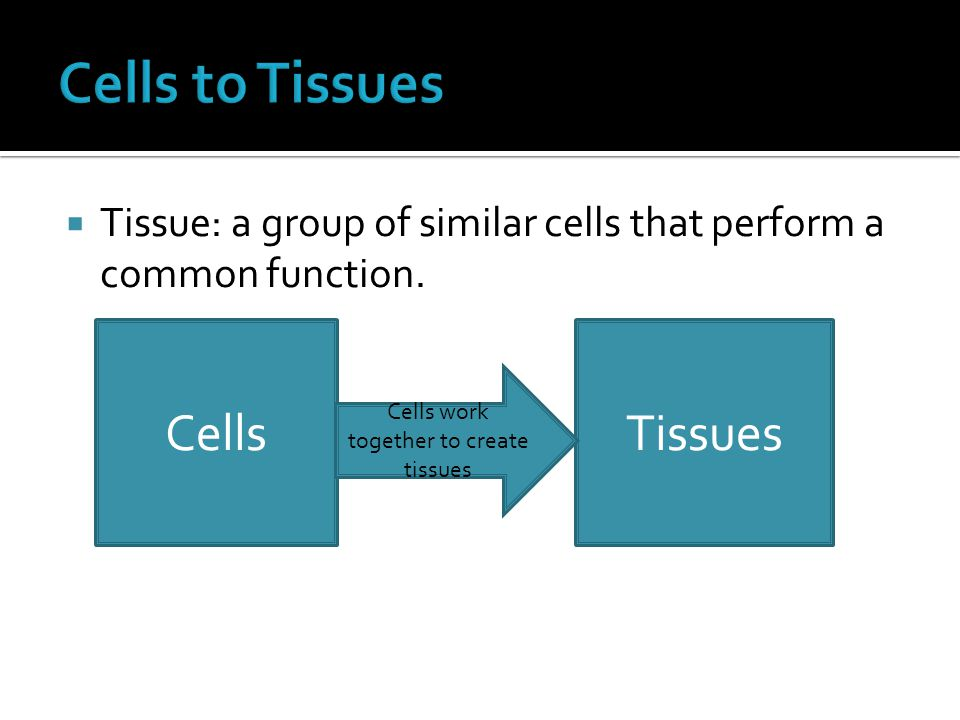  Tissue: a group of similar cells that perform a common function.