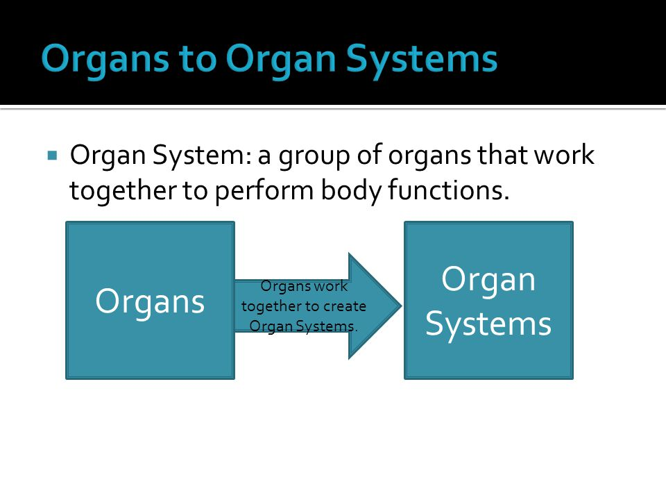  Organ System: a group of organs that work together to perform body functions.