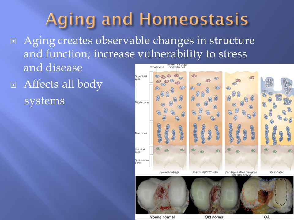  Aging creates observable changes in structure and function; increase vulnerability to stress and disease  Affects all body systems