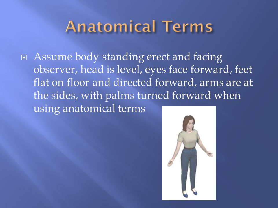  Assume body standing erect and facing observer, head is level, eyes face forward, feet flat on floor and directed forward, arms are at the sides, wi