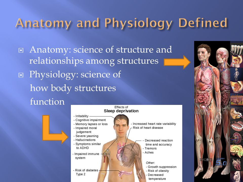  Anatomy: science of structure and relationships among structures  Physiology: science of how body structures function