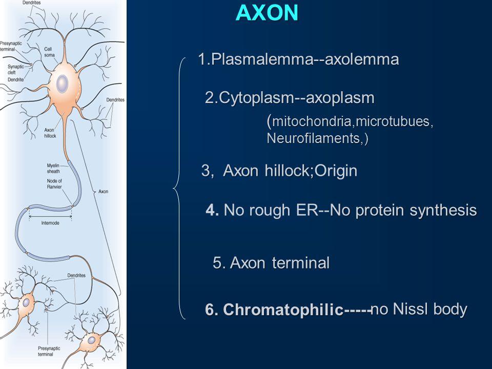 Morphology of neuron Two parts Cell body (soma) Processes Dendrites Axon 1.membrane 2.perikaryon 3.nucleus Presynaptic terminals. terminal (bouton / b